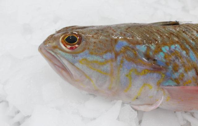 pieterman, een zeer smakelijk en gemakkelijk visje - fix fisch